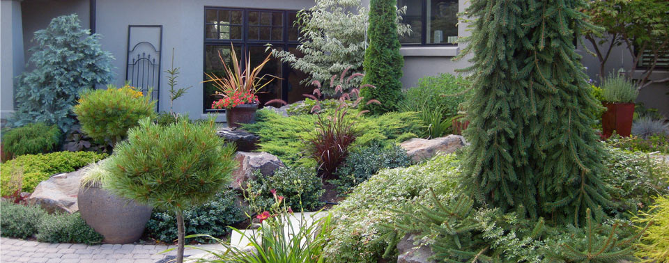 front-yard-conifers