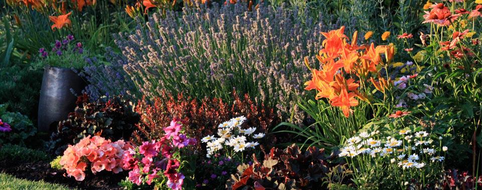 lavender-lilies-cosmos-color