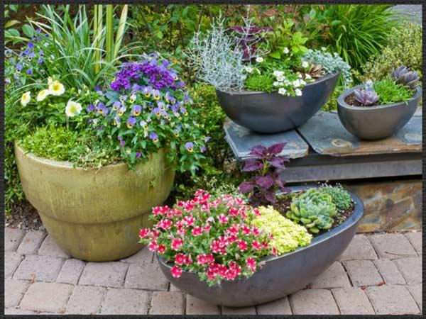 Amazing Pots  ...