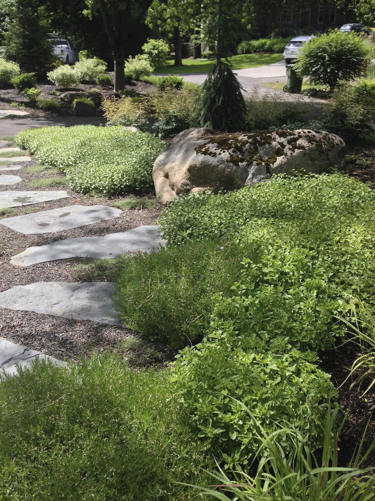 woodland-herb-garden