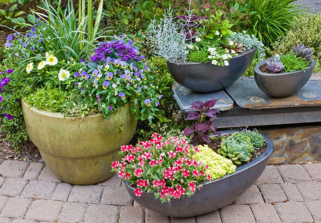 Lovely cluster of pot arrangements along front yard entry.